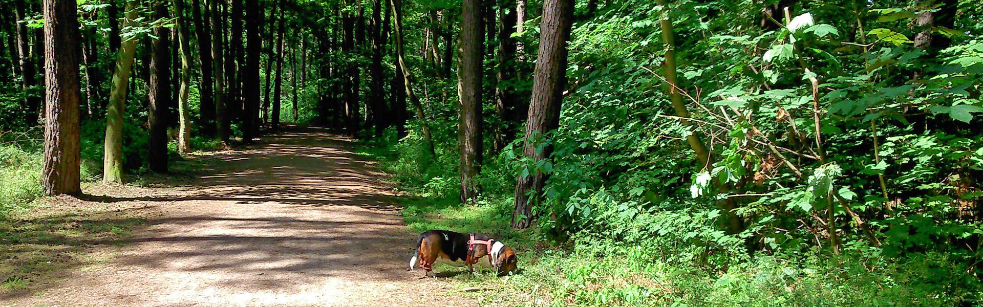 Lina im Wald